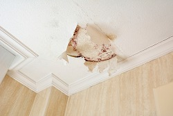 Mold Infestation on ceiling