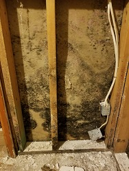 Mold Infestation within walls