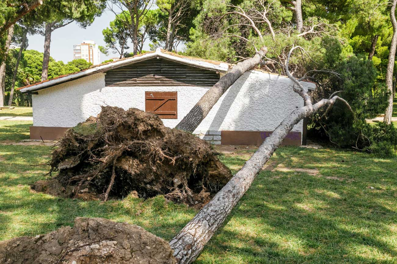 Most Common Property Damage Types in Florida